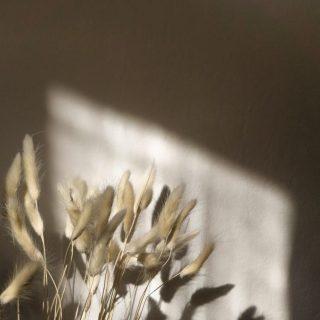 Reminder: train your mind to see the good in every situation ✨  #sojawas #soywax #sojakaarsen #sojakaars #vegankaarsem #ecofriendly #vegan #geurkaars #geurkaarsen #scentedcandles #fika #hygge #hyggelife #duurzaam #duurzamekaarsen #crueltyfree #woodwick